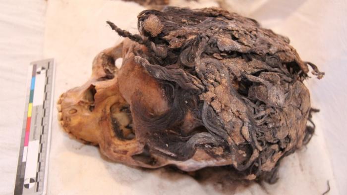 egypt-hair