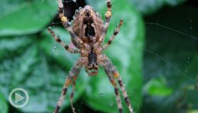 WTH?! Thursday: Prosecutor Suspended For Pulling Gun On Fake Spiders ... And More