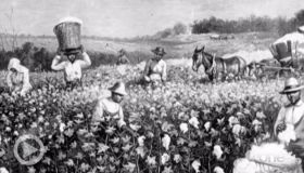 'The Half Has Never Been Told:' Author Explains How Slavery Powered American Capitalism