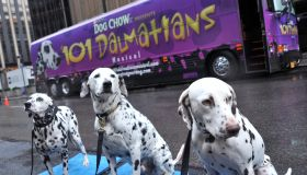Dalmatian Stars From 'The 101 Dalmatians Musical' Arrive In NYC