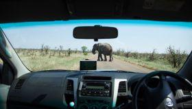 Elephant meets tourists, Kruger Park, South Africa