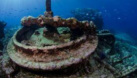 Fren angelfish inside shipwreck