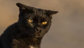 Close-Up Portrait Of Black Cat Outdoors