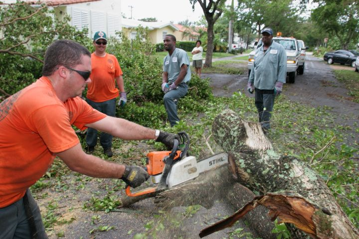 City workers sawing fallen trees caused by Hurricane Katrina.