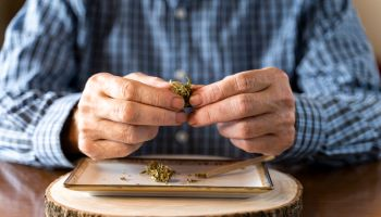 Senior man at home rolling marihuana joint